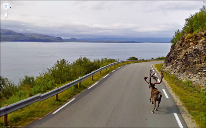 Big Game Hunting on Google Maps Street View