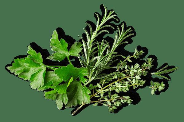 Green herbs bunch