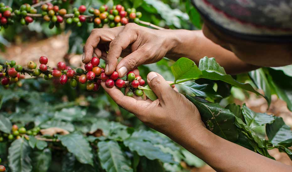 Guide to buying fair trade coffee