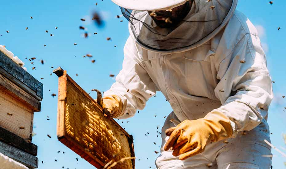 what to ask your organic honey wholesaler