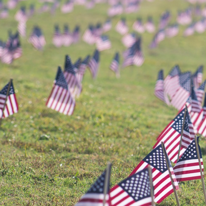 Yard with hundreds of little american flags stuck in the ground