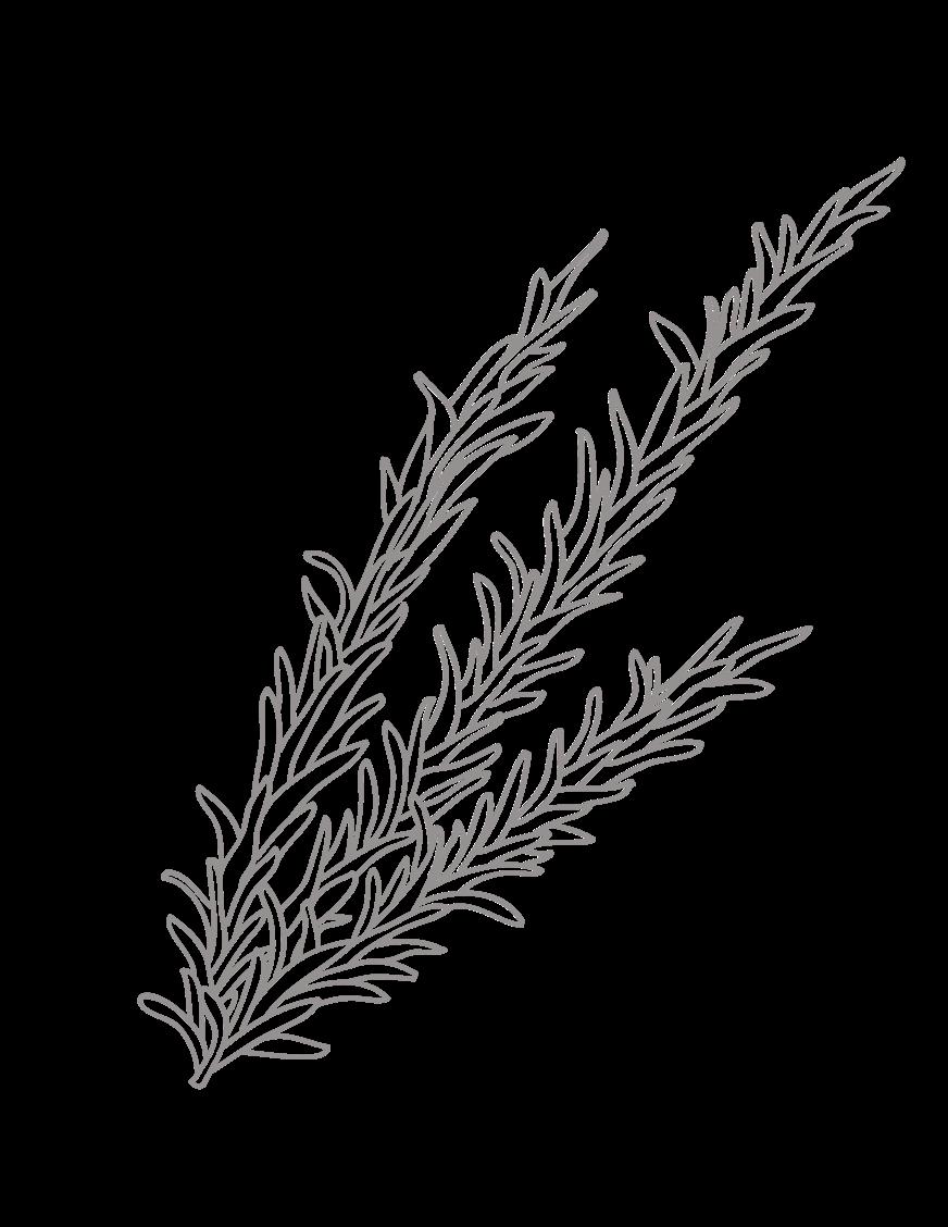 Herbs cuisine icon.