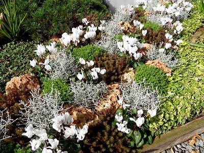 Grabbepflanzung im ganzen Jahr