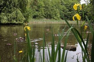 Naturschutzgebiet-Herrenberg-Grabsteine