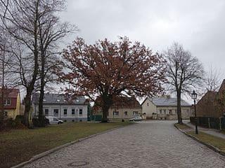 Wandlitz-Grabstein-Steinmetz-Bestattung-Friedhof