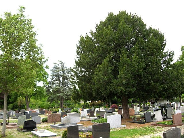 schöne günstige Grabsteine in Herxheim Steinmetz Urnengrab Einzelgrab Doppelgrabstein schöne Grabmäler
