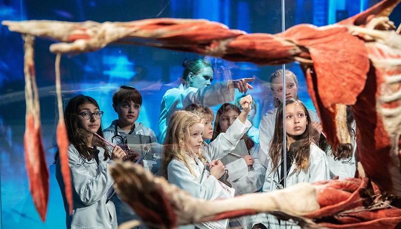 Kids looking at the human body at Body Worlds