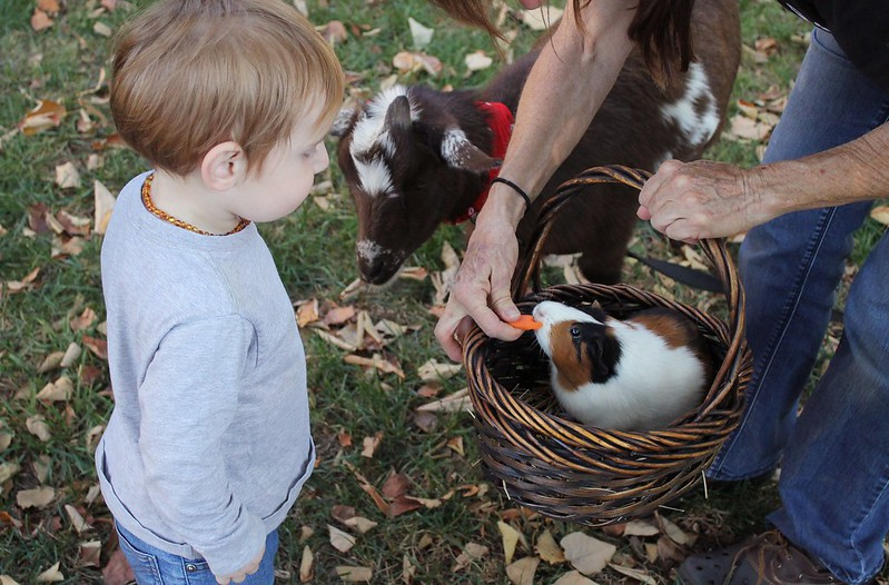 city farm for babies in London