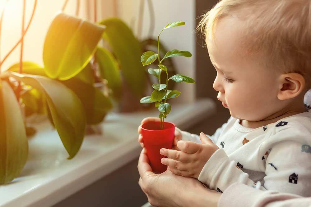 toddler holding baby plant