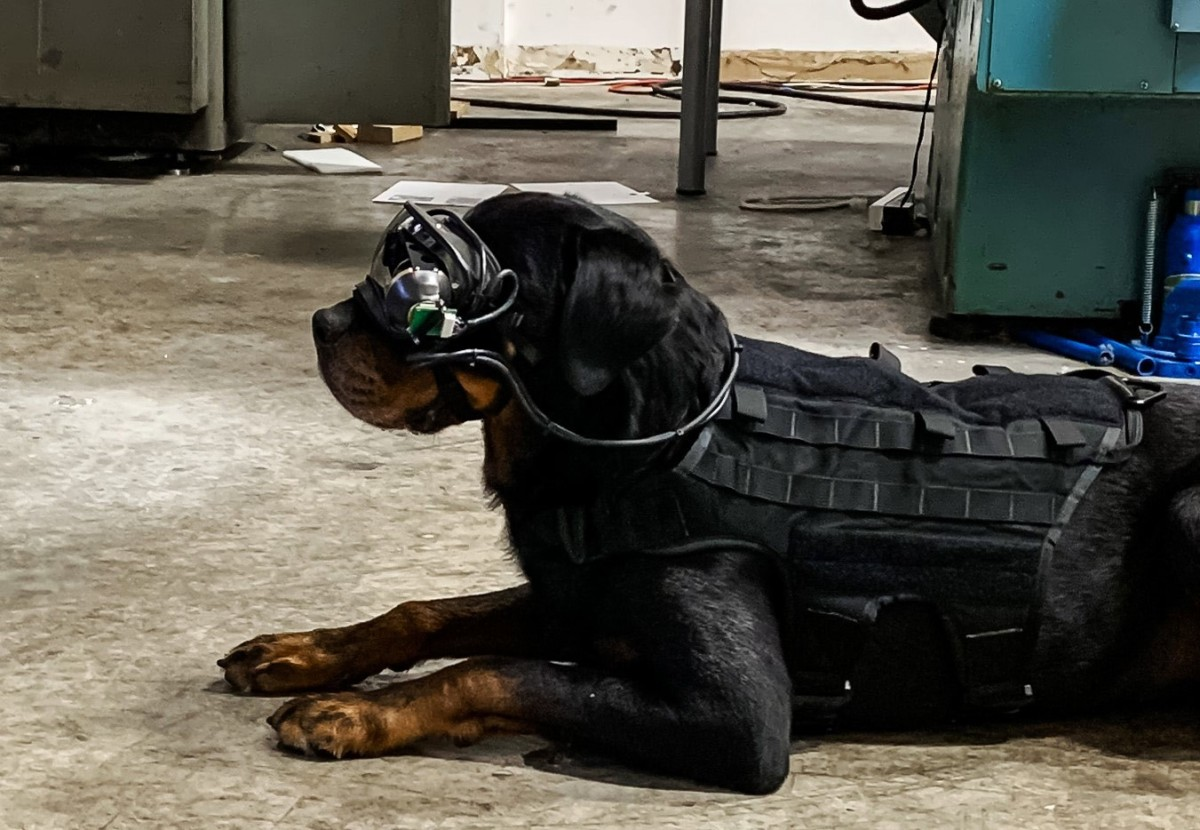 AR goggles for dogs -- augmented reality technology in military