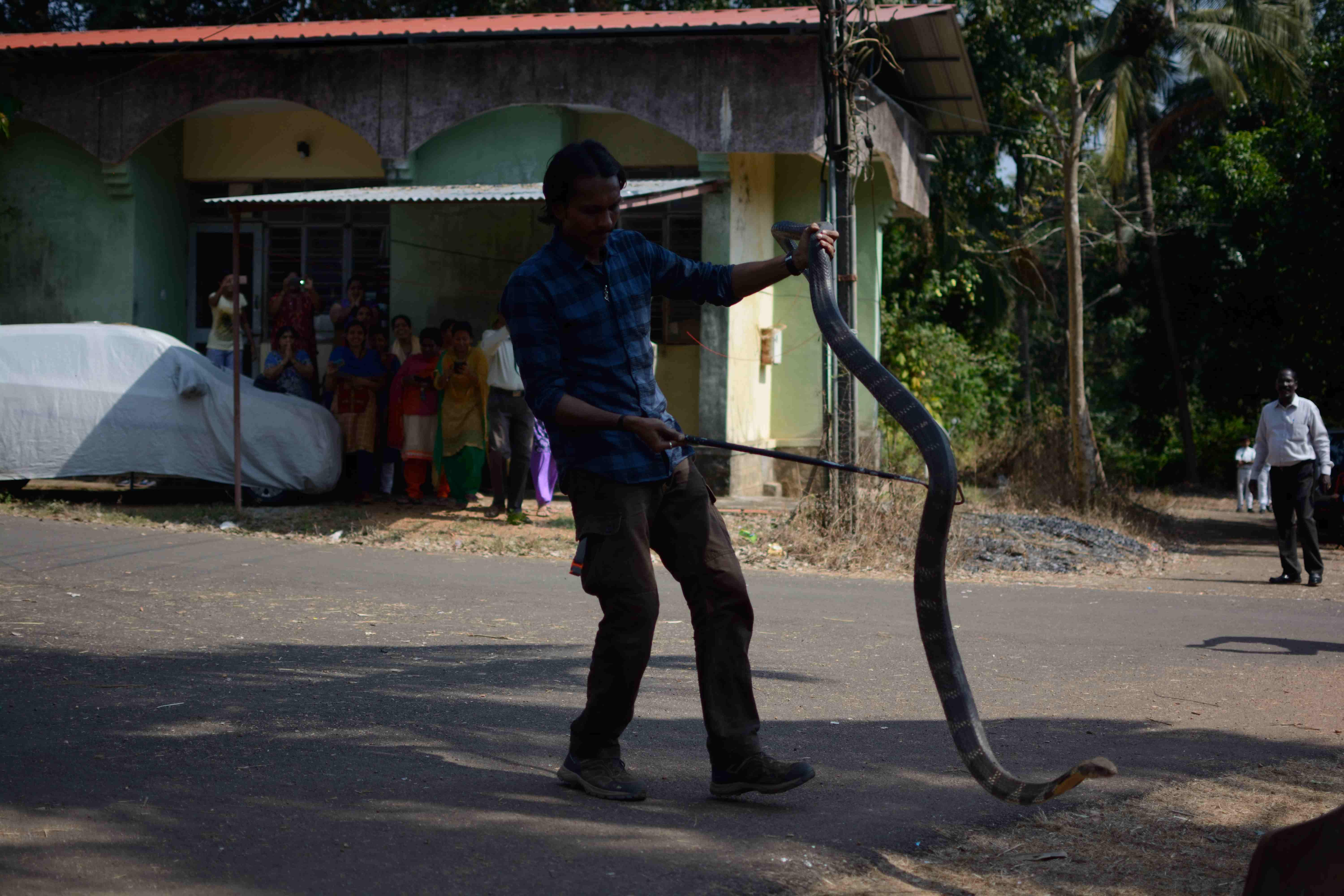 The fascinating life of a  Snake Rescuer