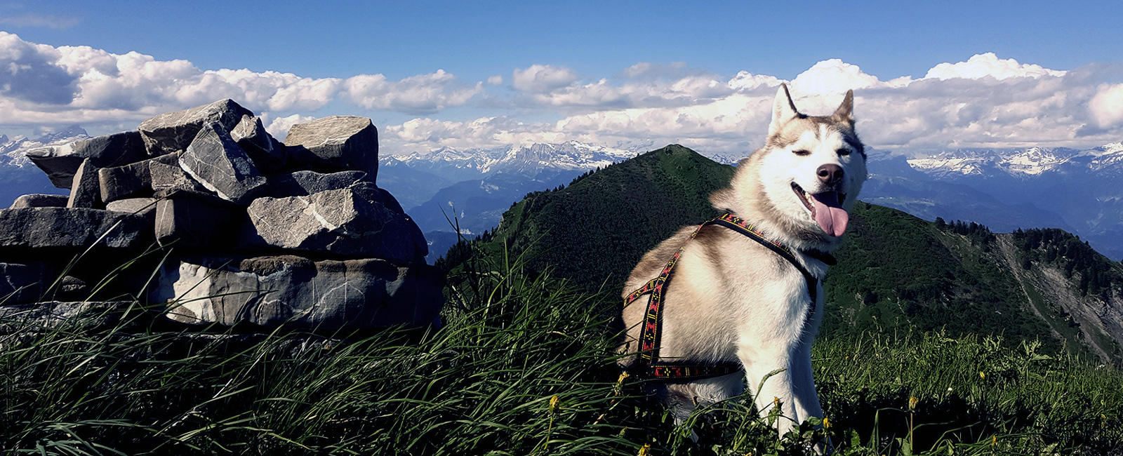 Say Goodbye to Dog-Walking and Say Hello to Dog-Led Hiking!