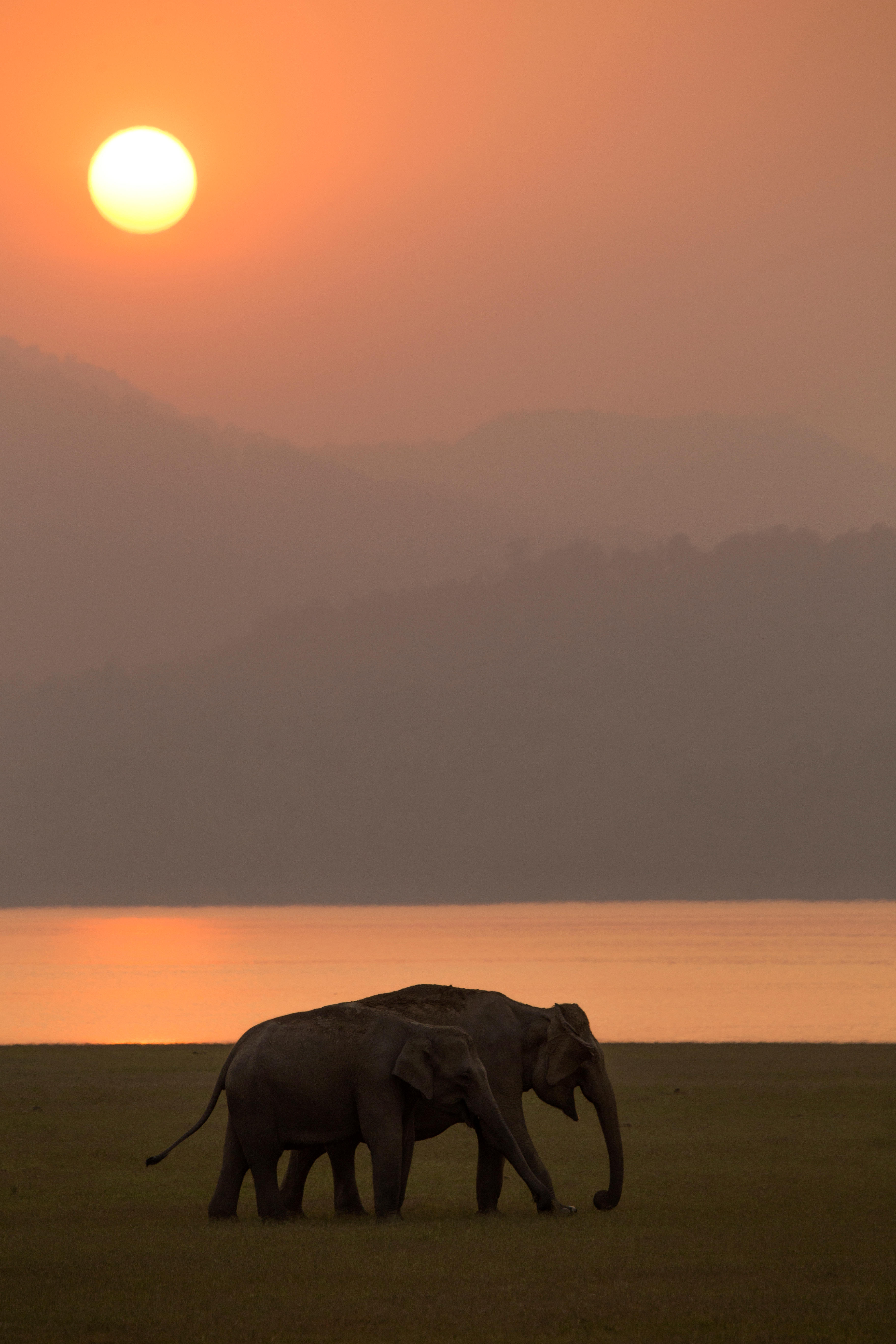 7 Best Places for Wildlife and Bird Photography in India