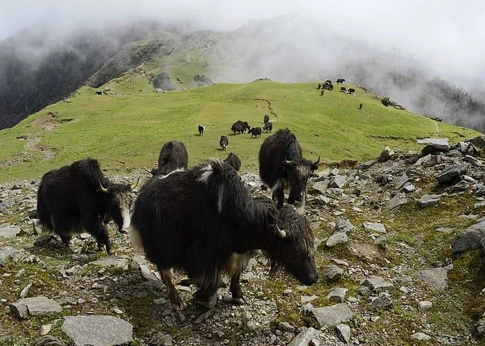 trek the Sandakphu in himalayas