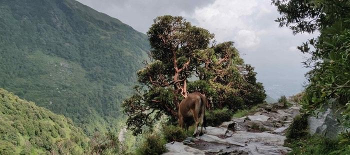 Triund Trek in himalayas