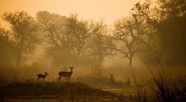 keoladeo national park photgraphy