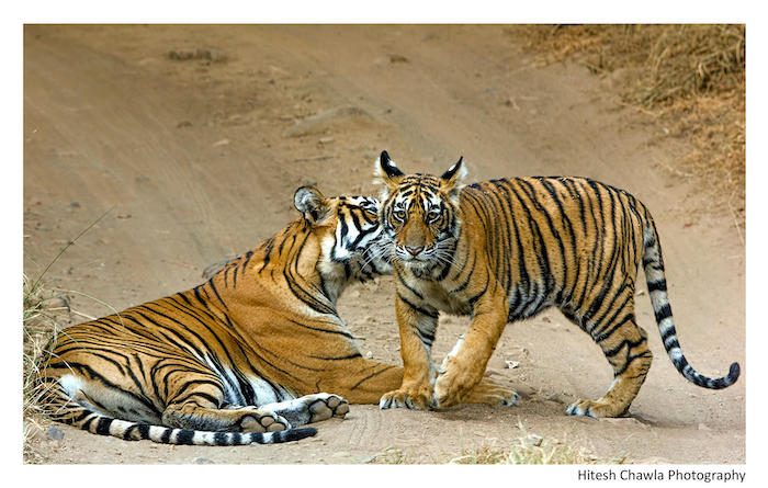 Ranthambhore national park photography