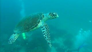turtle in the deep water