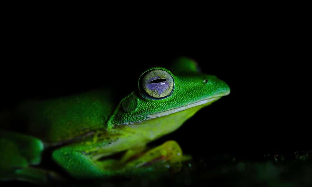 Photo Story - Discovering the Malabar Frogs in Amboli
