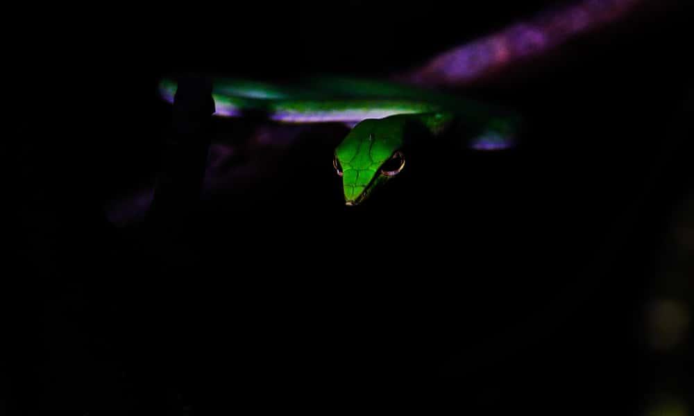 green wild snake
