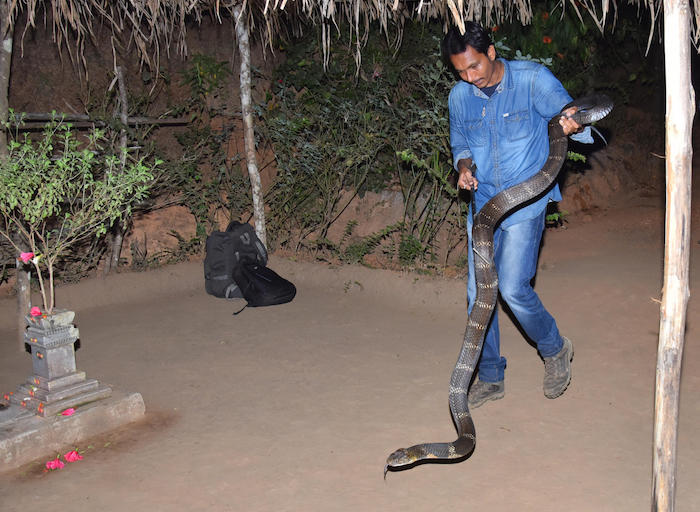 Snake rescuer