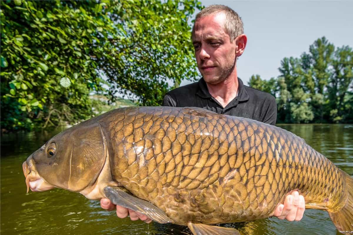 man holding a large carp