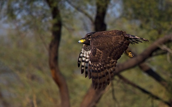 Wildlife Photography at Keoladeo National Park