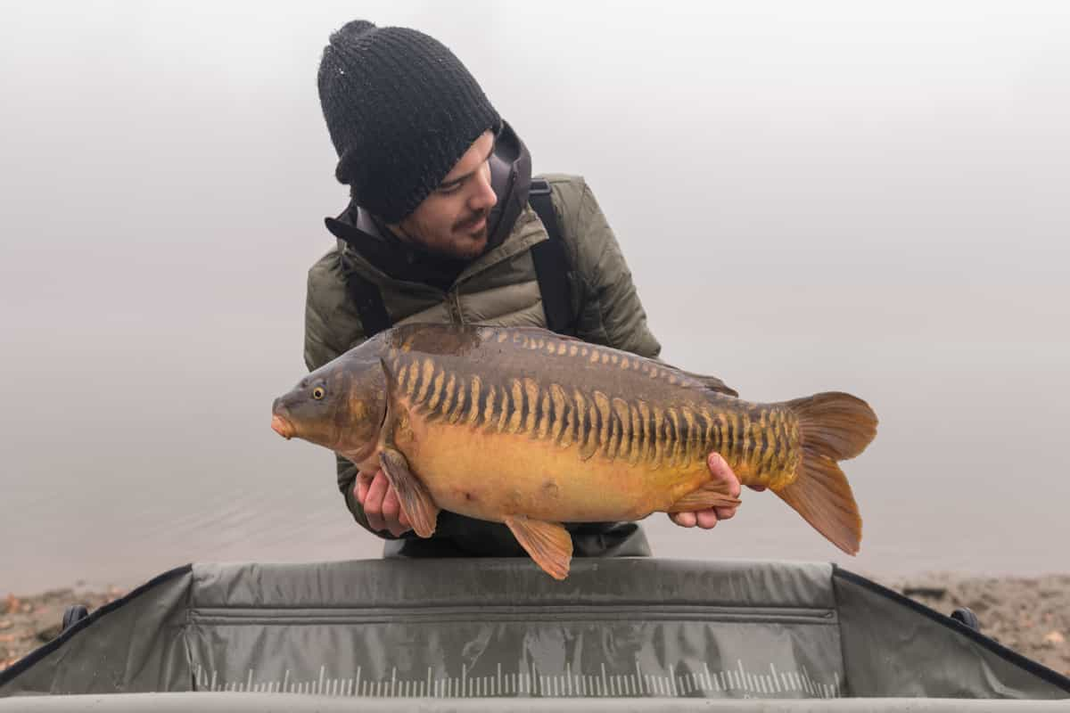 3 Tips To Catch Big Carp In Lake