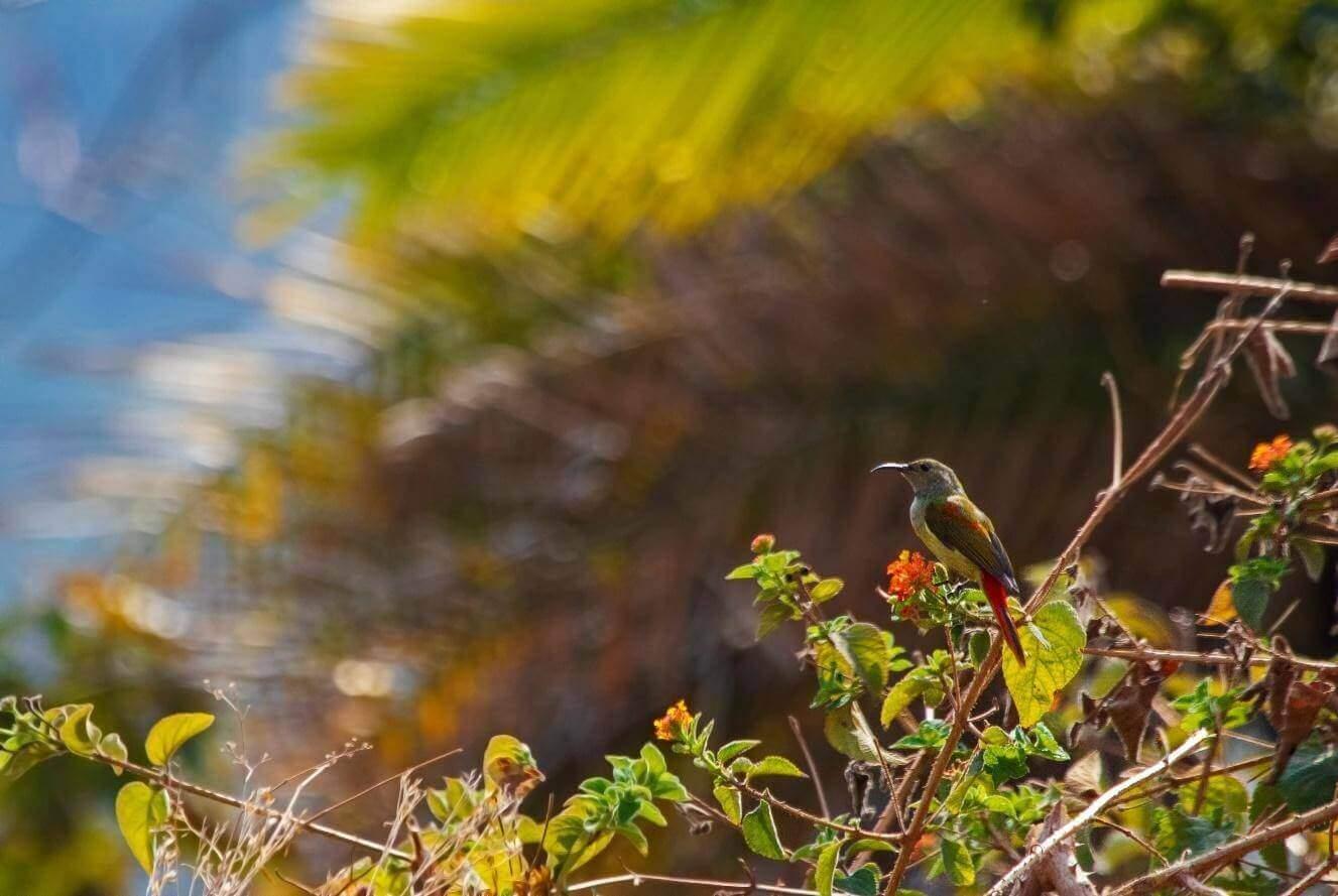 Chakki Mod – An Unfamiliar Birding Bliss