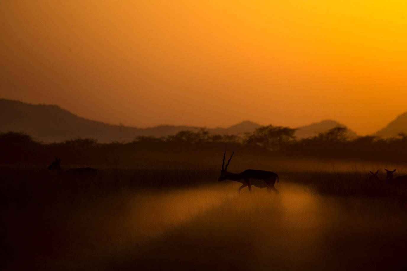 Winter Wildlife Photography Destinations in India