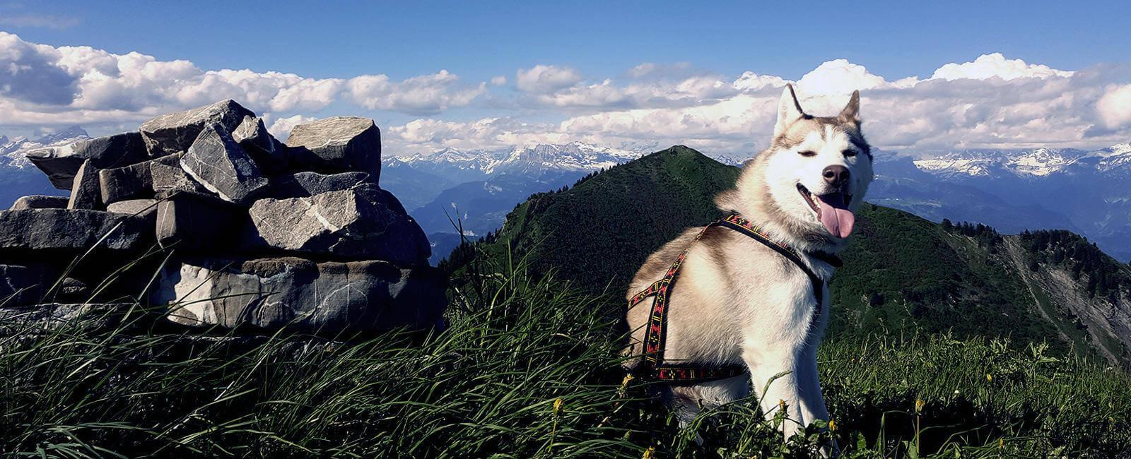 Say Goodbye to Dog-Walking and Say Hello to Dog-Led Hiking!