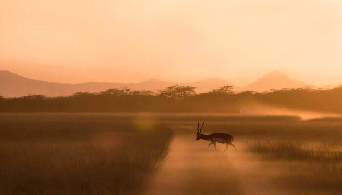 Wildlife Photography for Beginners - Guidelines