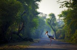 bird in light, habitat shot, wildlife