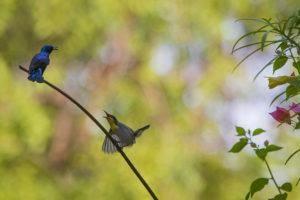 wildlife photography wildlife, photography tips, birds, habitat