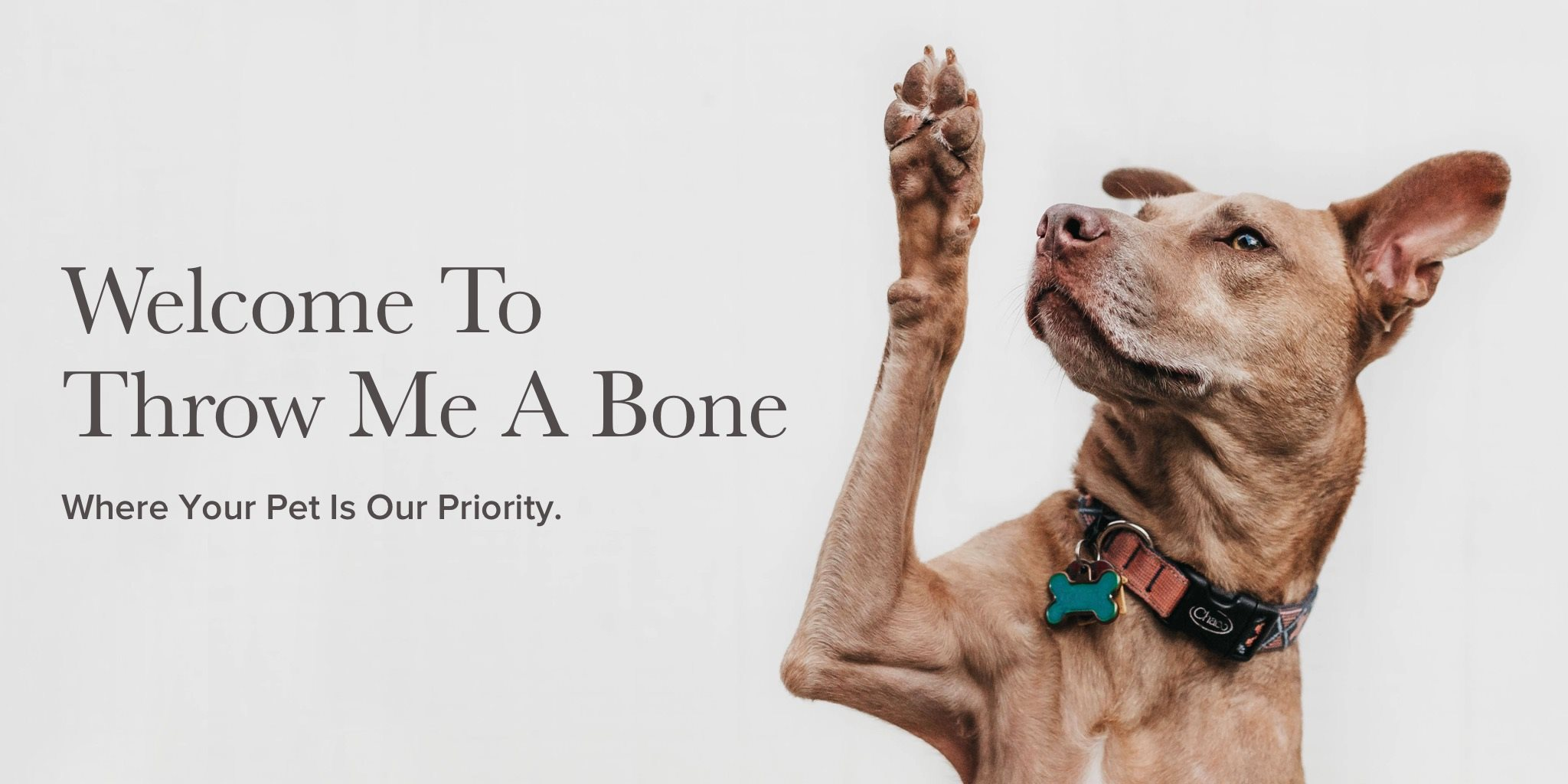 Throw Me A Bone | Home