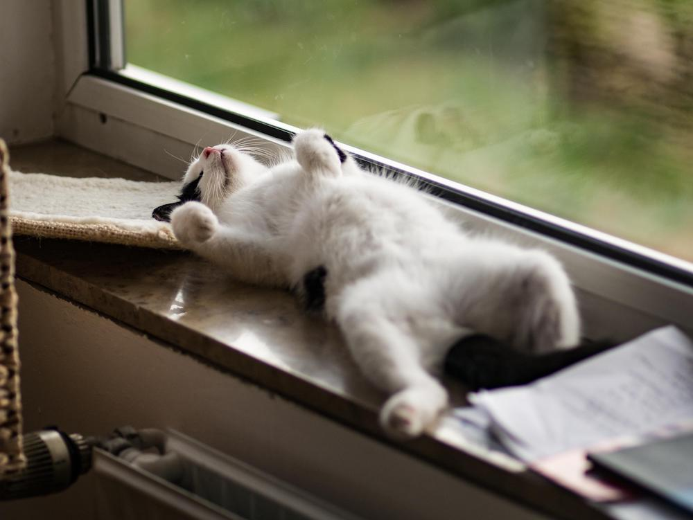 a white Kitten with black spots lying on his back in a window sill looking very relaxed