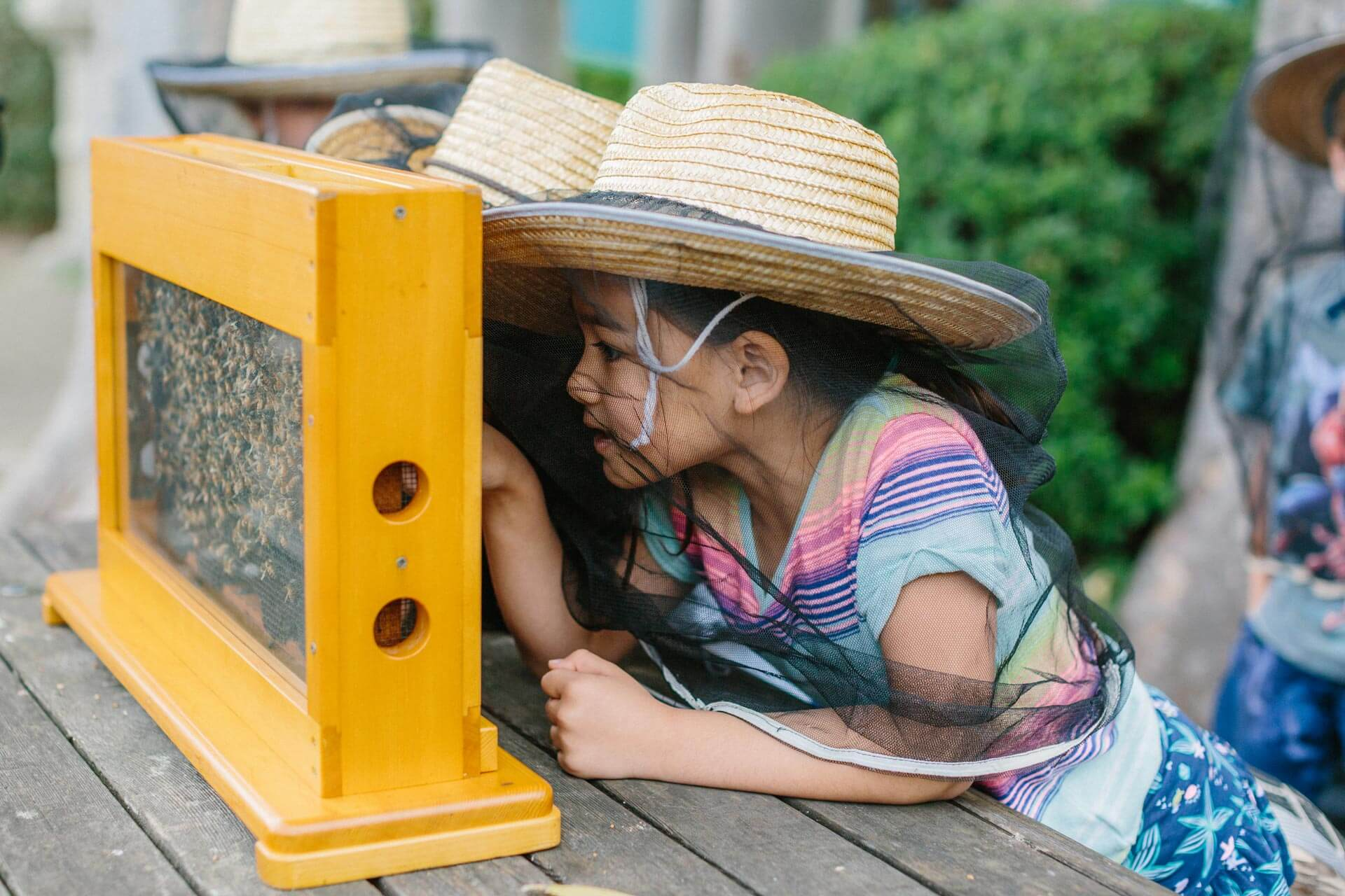 Elementary School Students Peer into Honey Bee Containment