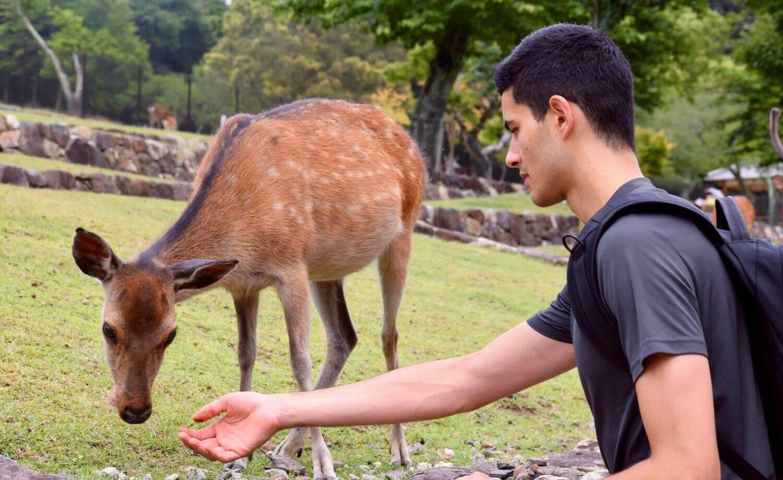 A Teacher Feeds Wild Deer