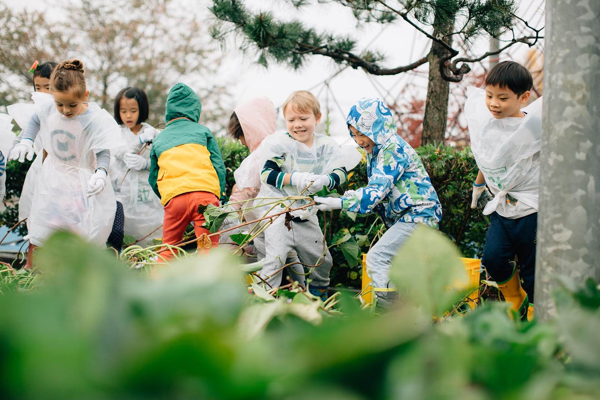 Elementary School Students Pick Potatoes from the Garden