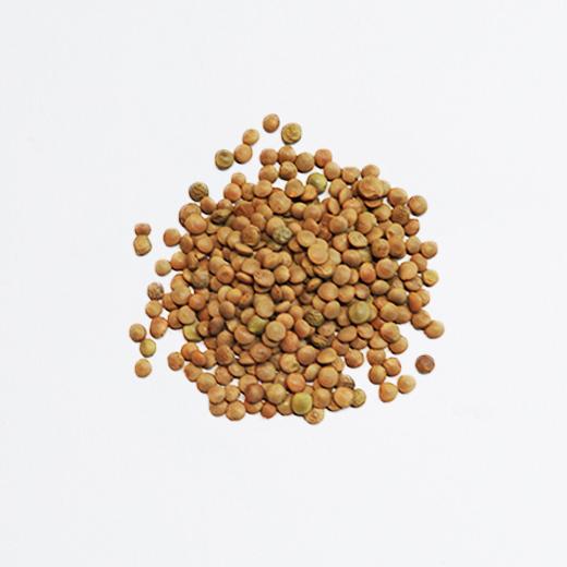 Lentillons du Perche