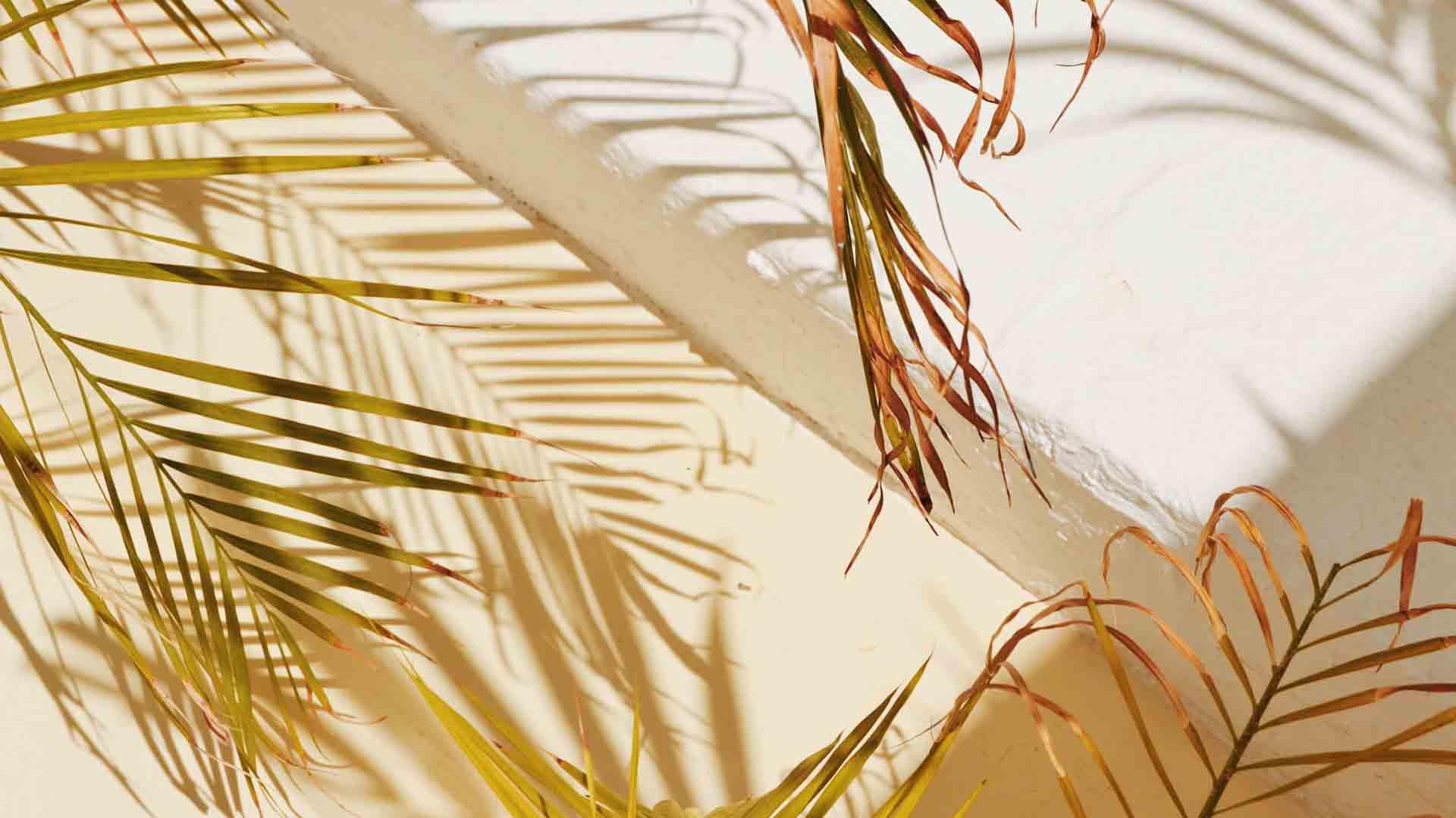 mood été ombre plante soleil