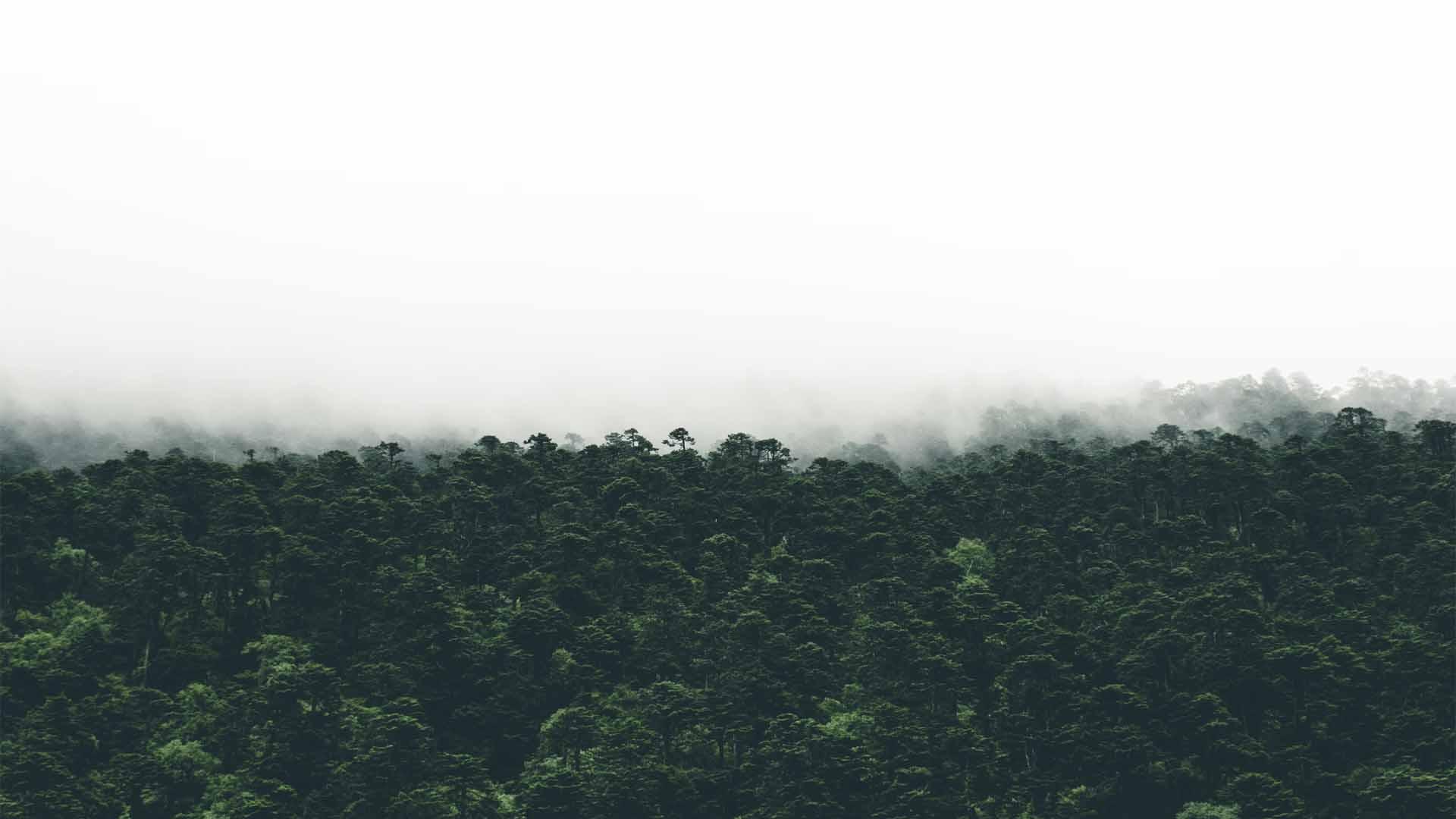 empreinte carbone bilan calcul définition foret environnement