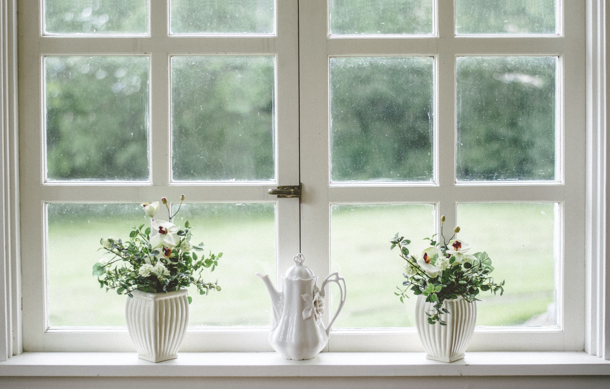 Plants in front of white wood window