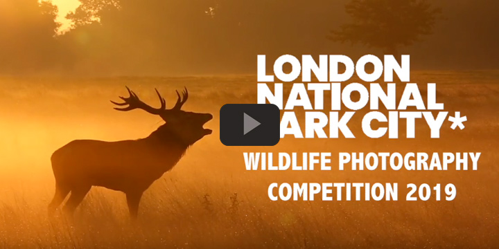 National Park City Wildlife Photography Competition - Video