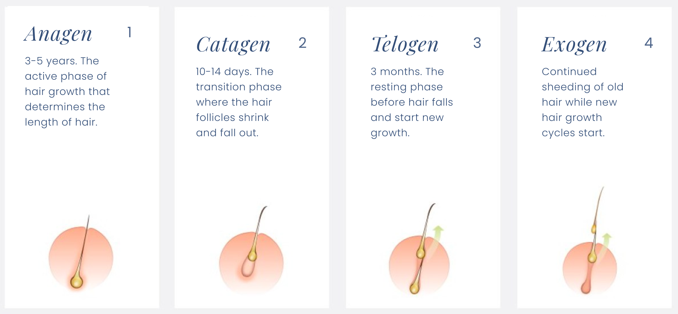 Chart outlining the four phases of the hair cycle with graphics