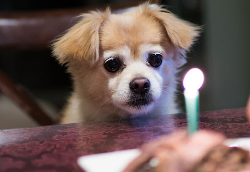 A dog at a table with a birthday cake