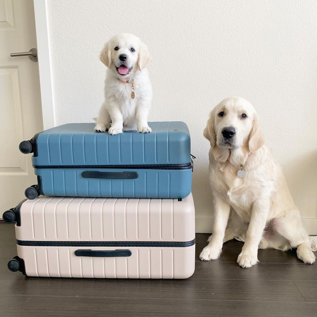 Away Luggage social media post –dogs with suitcases