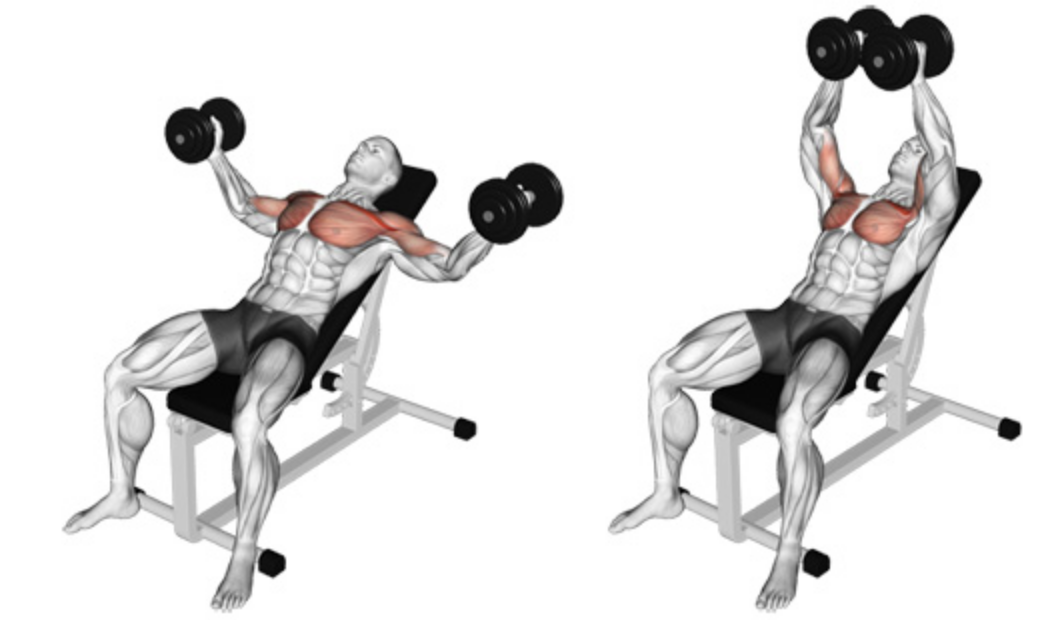 The Incline Dumbbell Fly 101 | How To Exercise Your Upper Chest!