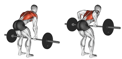 The Barbell Row: A Complete Guide   Form, Benefits, & Variations!