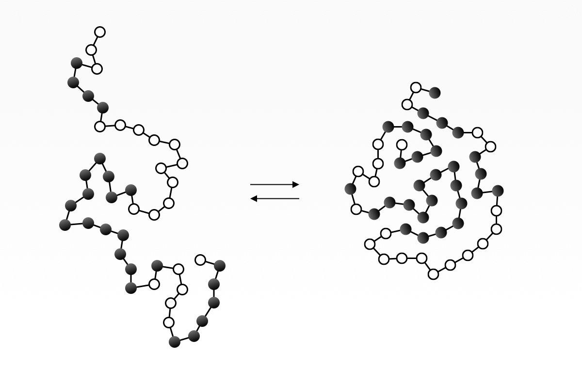 Unfolded v.s. folded protein